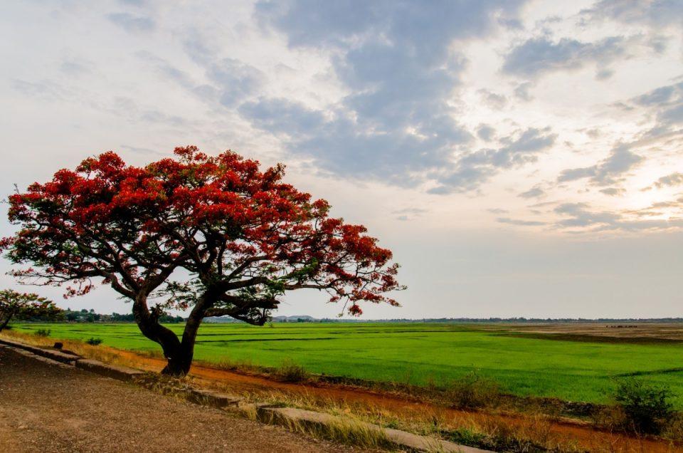 Madagascar, mon très cher pays